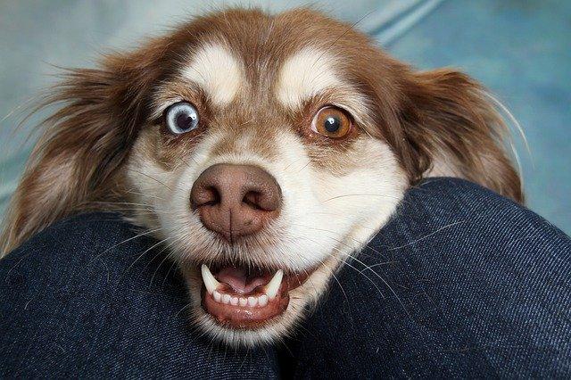 Reprodução em cães: entenda como funciona